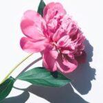 1輪の幸運の花